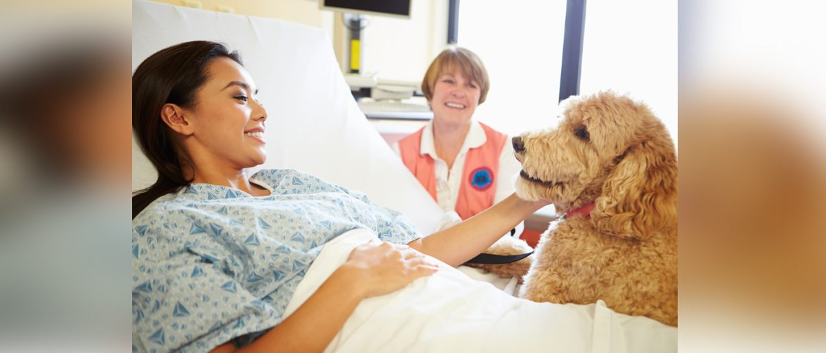 Doctor Dog on Duty – The Rise of Therapy Animals